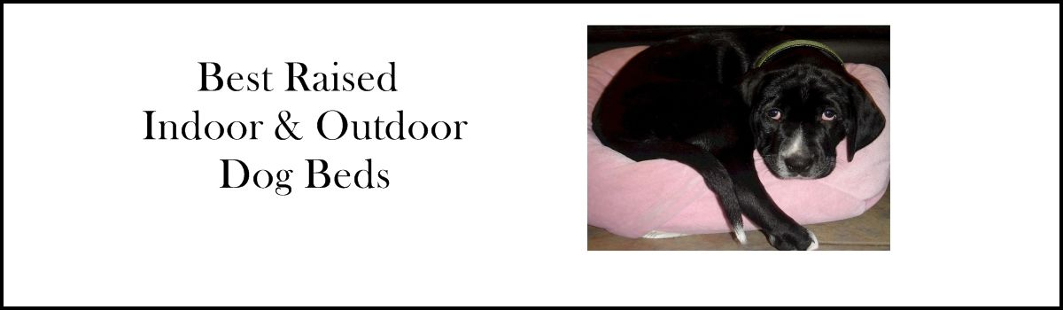 Headline for Best Raised Indoor and Outdoor Dog Beds 2015