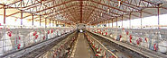 Breeder Cage For Poultry, Manufacturers, India