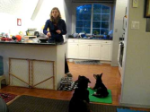 The Puppy Project Lesson 12: Managing Multiple Dogs at Feeding Time (aka Minimizing Chaos!)
