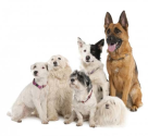 How To Manage Multiple Dogs