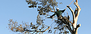 A Certified Tree Care Provider – Arborists In Auckland