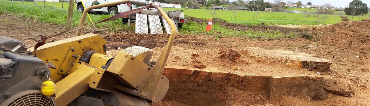 Headline for Stump Grinding & Removal In Auckland