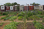 Why Joining the Urban Agriculture Movement Will Make You Healthier - US News
