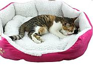 The Sherpa Cotton Fossa Dog Bed Cat Bed Pet Bed Indoor Pink Orange Brown Blue Yellow (pink, 46 x 42cm)