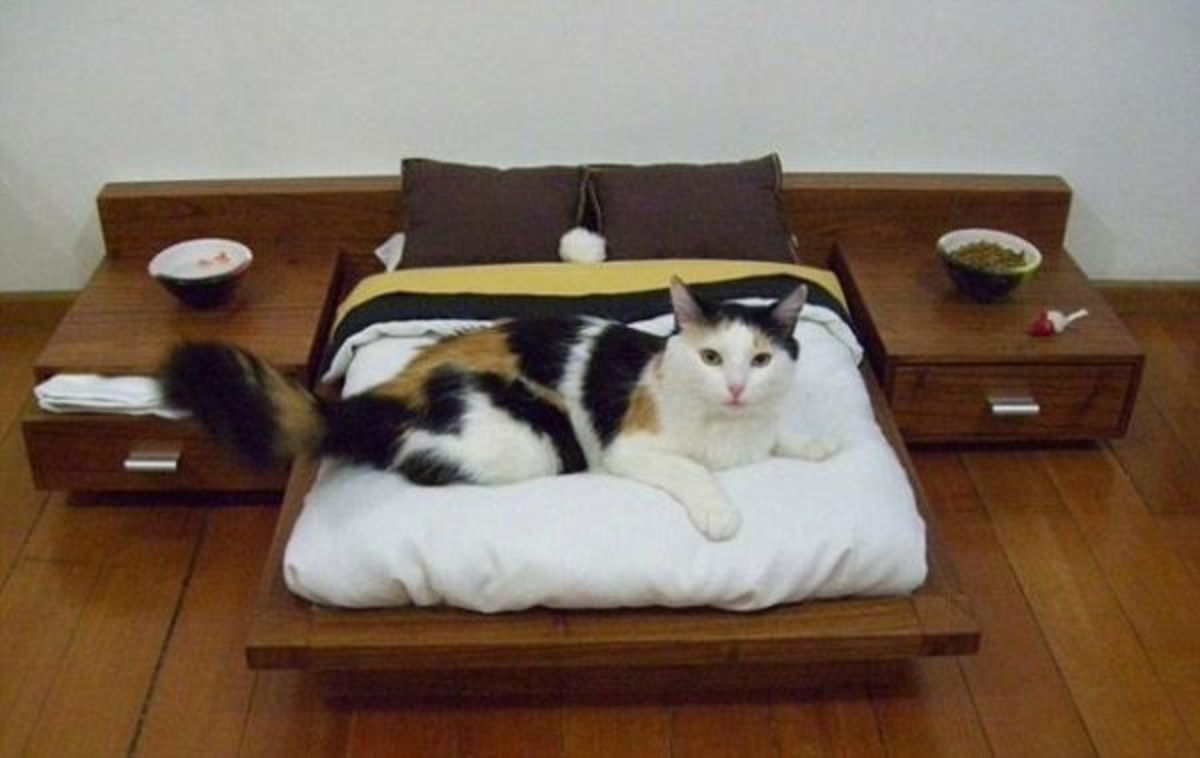Headline for Best Cat Beds and Furniture