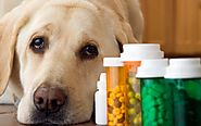 Love The Animals And Make Way For Their Good Health - Veterinary Drugs Manufacturers