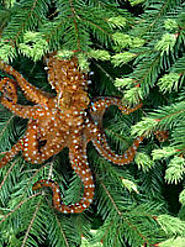 Save The Pacific Northwest Tree Octopus
