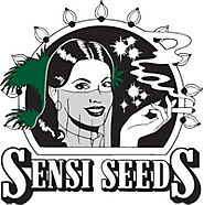 Cannabis Seeds for Beginners