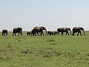 The Mara Triangle and the Maasai Mara National Reserve