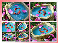 How The Koi Fish Pond Design Should Be !