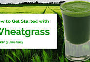 How to Get Started With Wheatgrass Juicing Journey