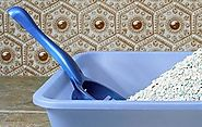5 Litter Box Training Tips