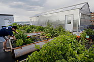 Rooftop gardening, and cooking lessons, come to new apartment building in Portland - The Portland Press Herald / Main...
