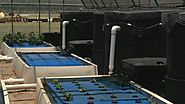 Travis Co. inmates investing time, energy into new aquaponics garden