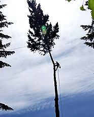 What you Need to Know Before Hiring a Tree Service