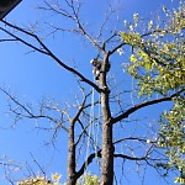 Tree Service Contractors Hiring Tips | Homeowner Tips | Verified Service Reports