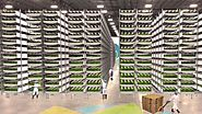 Farming in the Sky: Inside a Wall Street-Backed Vertical Farm