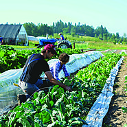 Seattle restaurants get their veggies fresh from the (organic) farm