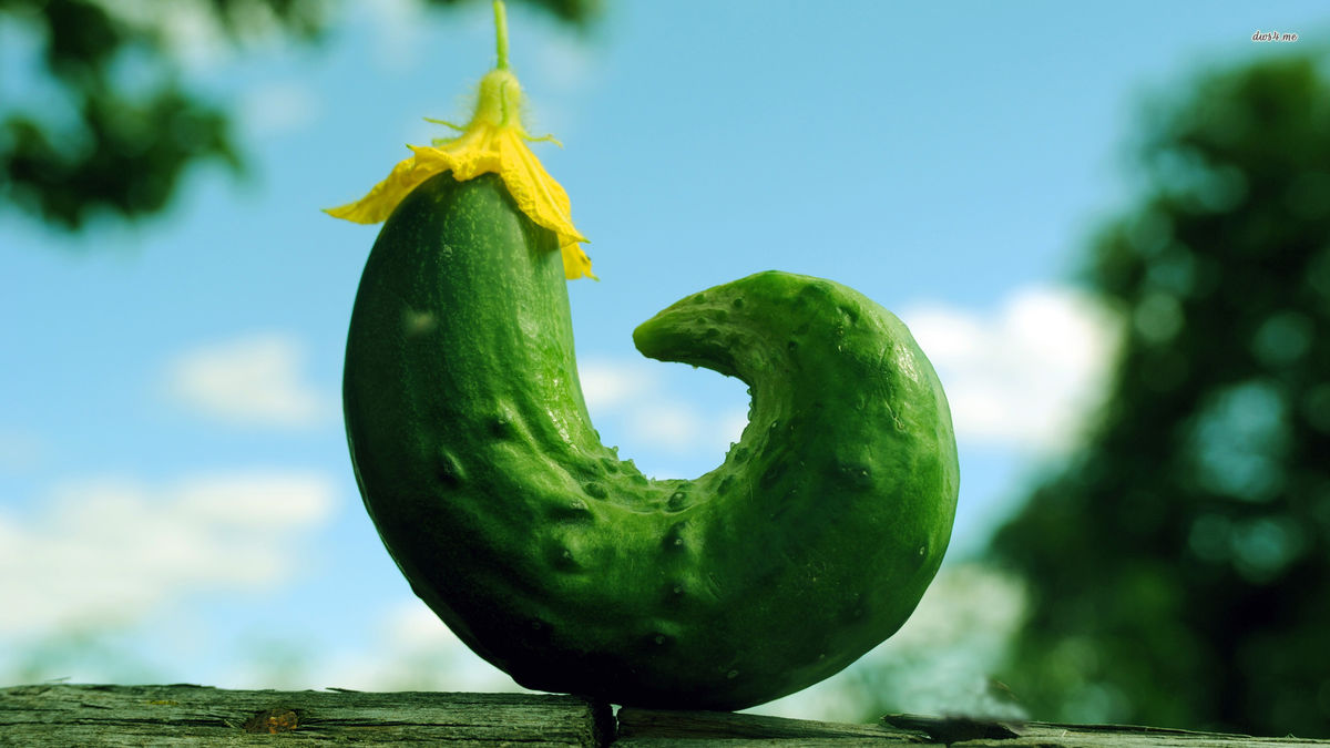 Headline for 10 Cucumber Recipes You Must Try