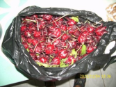 Get in Cancer Fighting Shape with Jamaican Sorrel