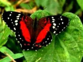 Butterfly Life Cycle Video for Kids -Science for Kids by makemegenius.com