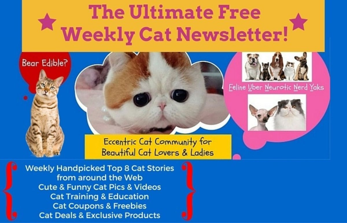 Headline for Pet Reporters Cat Newsletter Issue 3