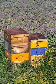 Ashland Parks and Recreation offers an introduction to bee keeping