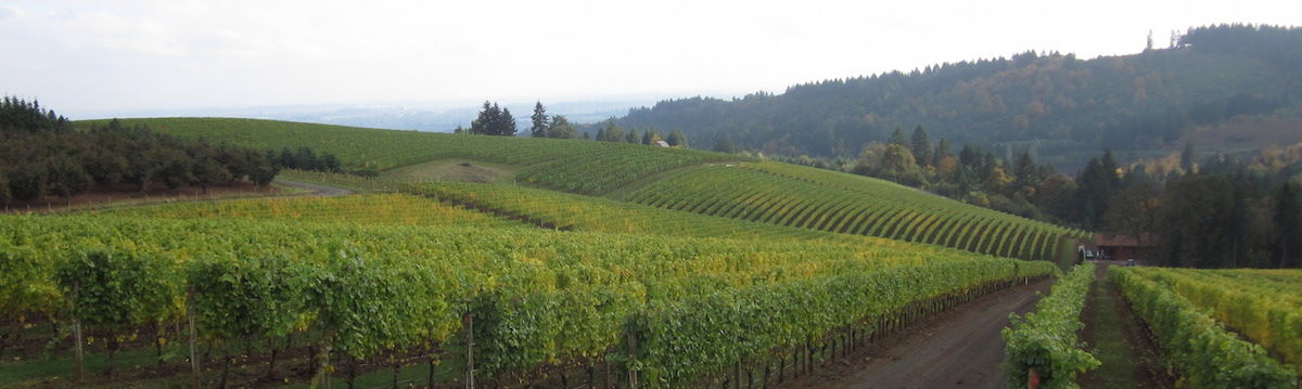 Headline for Willamette Valley Pinot producers - Oregon wine