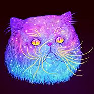 Psychedelic Pictures of Galactic Cats - Pet Reporters