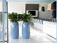 Indoor Office Plant | Foliage Indoor Plant Hire