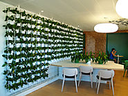Indoor Plant Hire Serivce Can Offer You with the Best Natural Environment