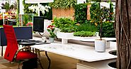 Make Your Office Green With Corporate Plant Service