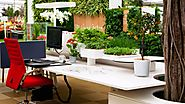 Tips To Get Finest Indoor Office Plants For Your Desk