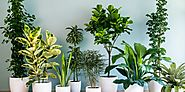 How To Create Beautiful Indoor Planters