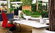 Best Indoor Plants for Offices for health and purify the air