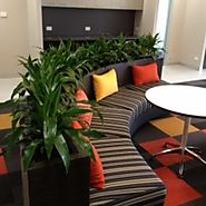 How Indoor Plants Melbourne Can Help in Taking Care of Flowering Plants?