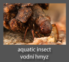 Aquatic insects photography