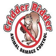 Cridder Ridder: Dead Animal Removal in Kansas City and more!
