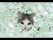 Cats Playing in Packing Peanuts