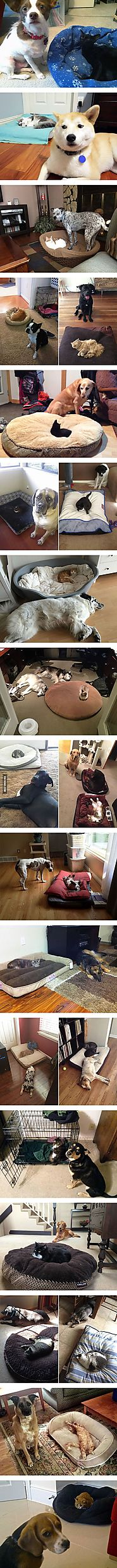 22 Dog Beds Stolen By Kitties