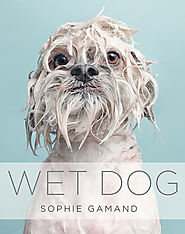 WET DOG by Sophie Gamand