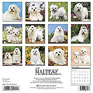 Maltese Dog Care | Shopping