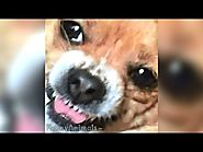 Funny Dog Vine Compilation 2015