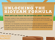 What Ants Can Teach the Enterprise About Teamwork