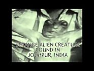 Strange Alien Creature Found In Jodhpur, India August 2015
