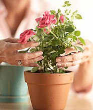 Alzcottages Blog - Know Alternatives for Seniors Care