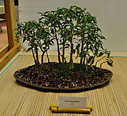 Bonsai Essentials: fertilizer What is a Fertilizer? Fertilizers can be characterized by the selection of nutrients th...