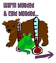 Kid's Corner - Warm Blooded and Cold Blooded