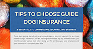 Tips to Choose Guide Dog Insurance