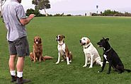 Keeping Away From Liabilities with the Dog Obedience Trainer Insurance